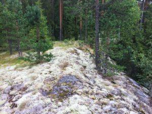 Nikkijärvi280817_1